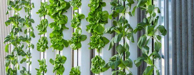 Come coltivare in idroponica