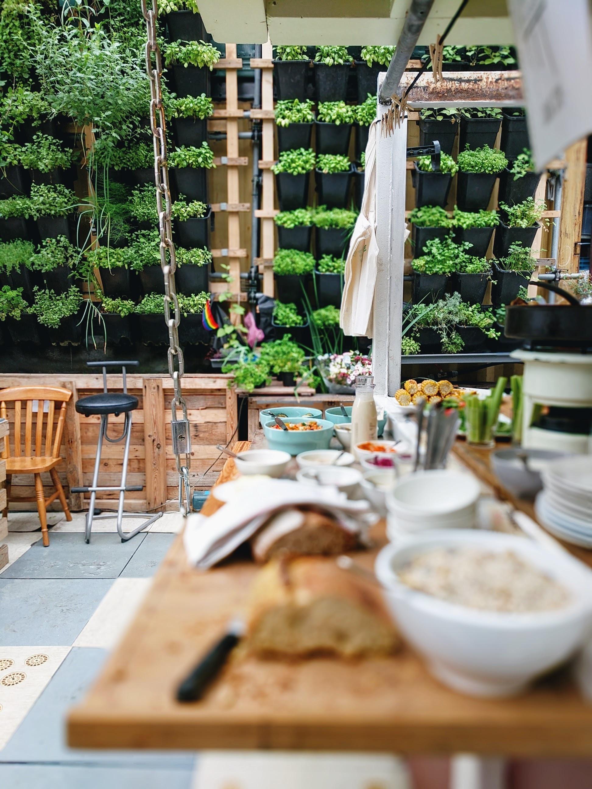 Coltivare In Casa Piante Aromatiche coltivazione idroponica: come coltivare le erbe aromatiche