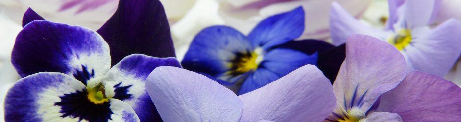 Come coltivare i fiori eduli